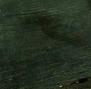Cuerno de Bufalo Negro